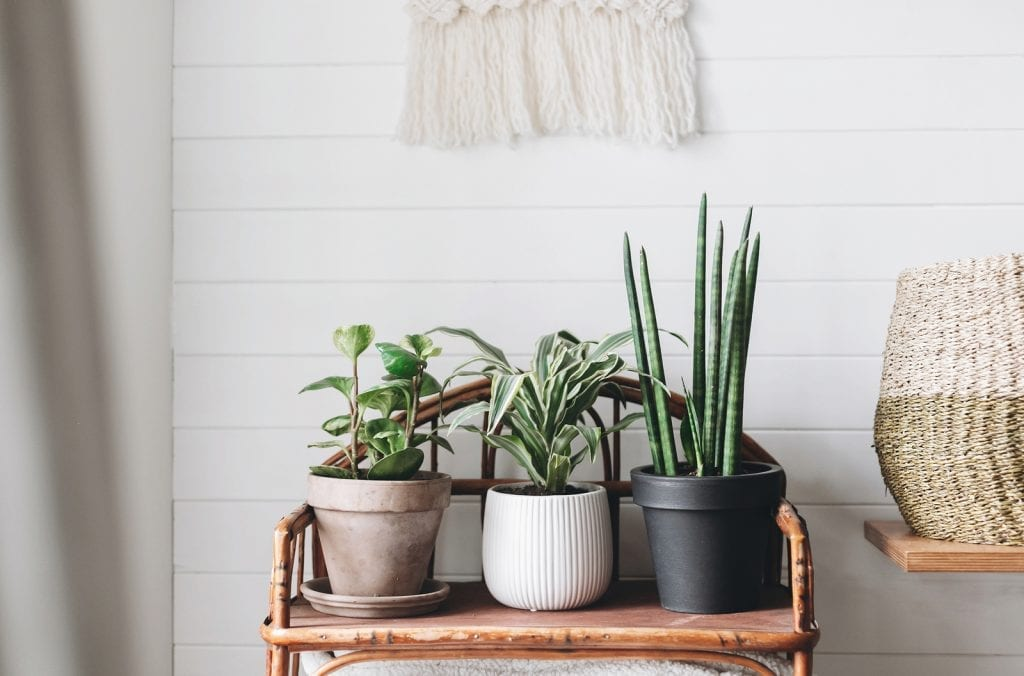 Best House Plants for a Home Office