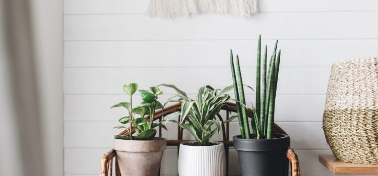 The Best (Hard to Kill) House Plants for A Home Office